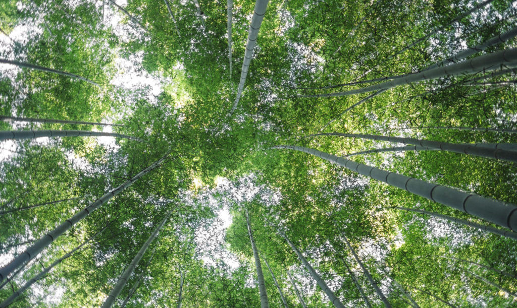 wood_forest-scaled-e1609332387382